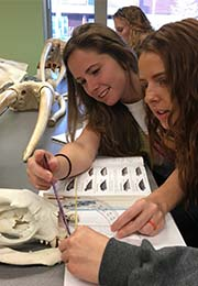 Students in class compare textbook to animal skull