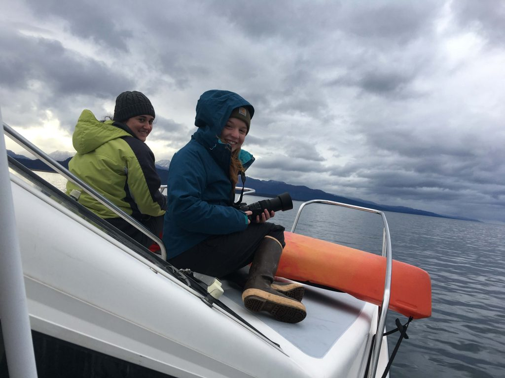 Looking for Whales
