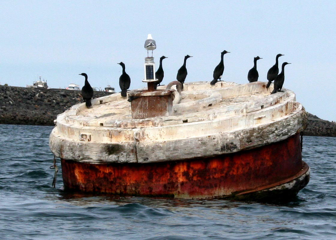 A lovely row of cormorants on a colorful buoy